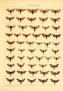 <i>Zygaena brizae</i> Species of moth