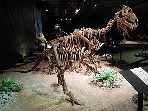 Hadrosauromorpha - Skeleton of Probactrosaurus, the taxon just outside Hadrosauromorpha