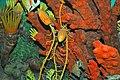 Diorama of a Pennsylanian seafloor - Amphicentrum fish, sponge, crinoids, rugose corals 2 (45642214051).jpg
