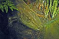 Diorama of a Permian forest floor - Eryops & vegetation 2 (31830528948).jpg