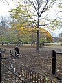 Dogpark between Richmond and Adelaide, on Trinity, 2014 11 05 (3) (15695730296).jpg