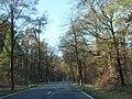 Dresdner Heide - geo.hlipp.de - 6444.jpg