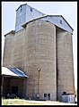 Dunedoo Wheat Silos-1and (3161635522).jpg