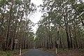 East Lynne NSW 2536, Australia - panoramio (2).jpg