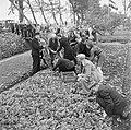 Een perk met kolen wordt geplukt. In het midden een man met gebogen hoofd die ie, Bestanddeelnr 900-2856.jpg