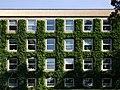 Efeu omkring vinduerne, facade mod Universitetsparken.jpg