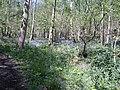 Eggerslack Woods Bluebells - geograph.org.uk - 381129.jpg