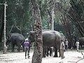 Elephant from Bannerghatta National Park 8694.JPG