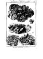 Encyclopedie volume 5-184.png