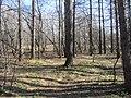 Engels, Saratov Oblast, Russia - panoramio (20).jpg