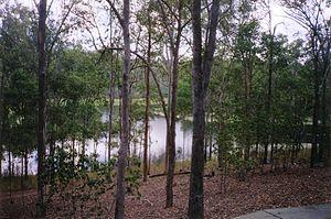 Brisbane Forest Park - Enoggera Reservoir Dam