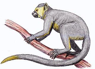 <i>Eosimias</i> Extinct genus of primates