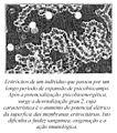 Eritrocito bio exp.jpg