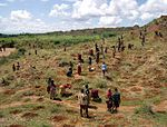 A picture of several dozen tribals tending to their soil. A large hill stands beside them to right.