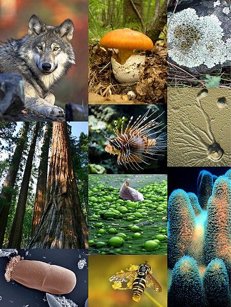 Ficheiro:Eukaryota diversity 1.JPG