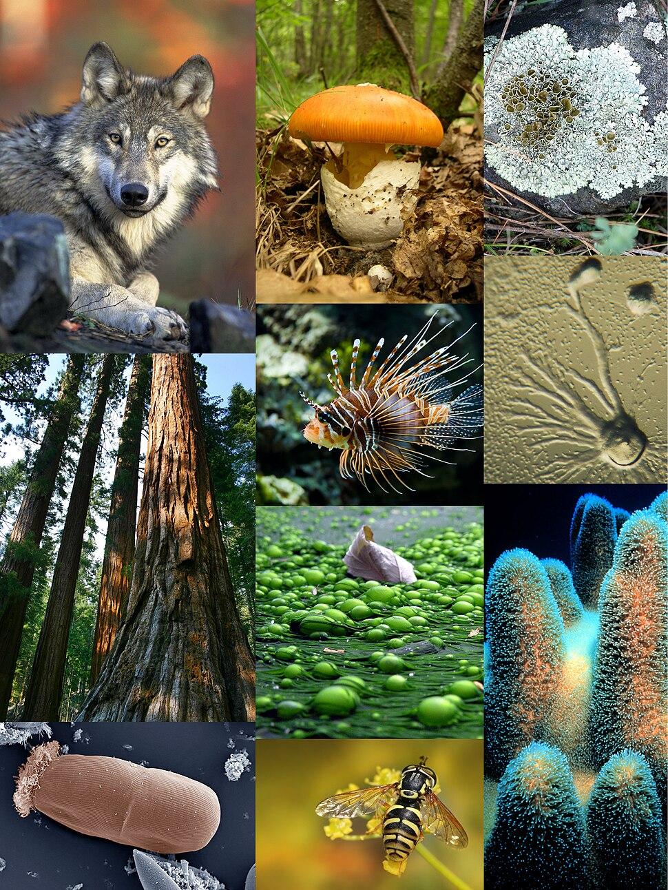 Eukaryota diversity 1