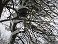 Fågelmatare i Tyresö 3.jpg
