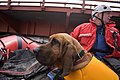 FEMA - 40687 - Valley Water Rescue member and his search dog in North Dakota.jpg