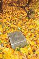 Fall in Peterhof (10242463923).jpg