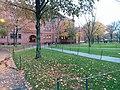 Fall leaves on the green lawn, at Harvard University,. November, 2019. pic.2 Cambridge, Massachusetts.jpg