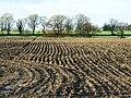 Farmland near East Grafton - geograph.org.uk - 1595631.jpg