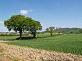 Farmland north of Kilvington Hall - geograph.org.uk - 419753.jpg