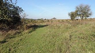 Farthing Downs - Image: Farthing Downs grassland