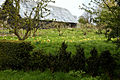 Feeringbury Manor crab apple, hedge and tulips, Feering Essex England.jpg