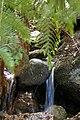 Ferny Glade, Wilson Promontory National Park.jpg