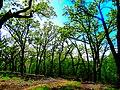 Festge Park County Park - panoramio.jpg