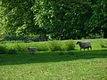 Field next to Hinton Ampner House - geograph.org.uk - 796340.jpg