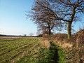 Field of cut maize near Morrey - geograph.org.uk - 1602532.jpg