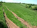 Fields near Crediton, Devon - geograph.org.uk - 447856.jpg