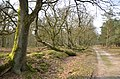 Fine views at fantastic trails at Deelerwoud in spring - panoramio.jpg