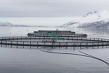 Fish cages.jpg