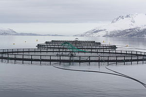 English: Fish cages in Velfjorden, Brønnøy, No...