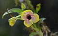 Flickr - ggallice - Orchid.jpg