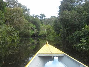 Campos Amazônicos National Park - Image: Flooded Forest