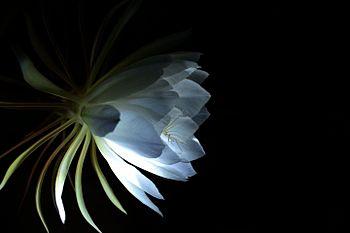 Flora (62).jpg