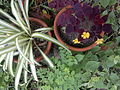 Flores de mi Jardín.jpg
