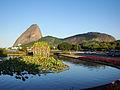 Flores do Aterro do Flamengo.jpg