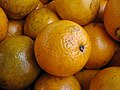 Florida navel orange 1.jpg