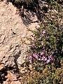 Flors silvestres 20 13 57 303000.jpeg