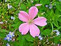 Flower Rex 26.jpg