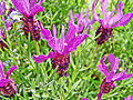 Flower Rex 9.jpg