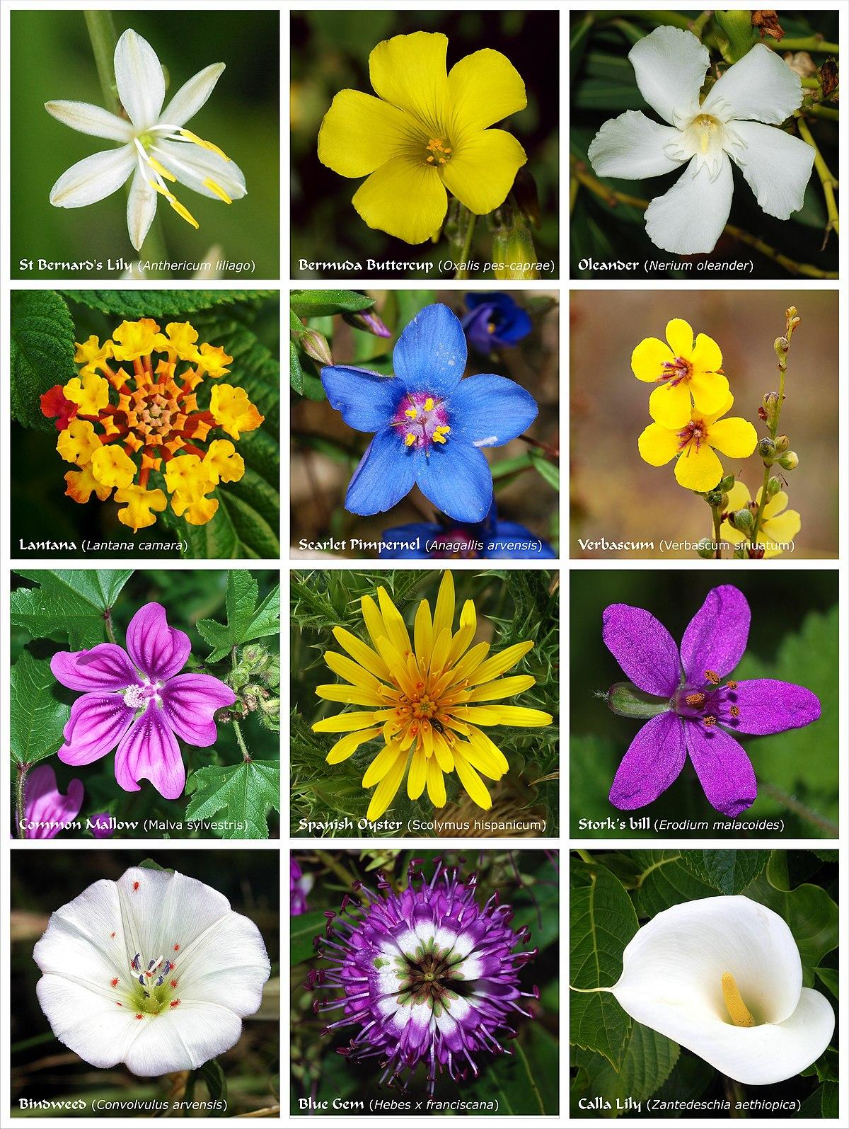 Flower poster 2.jpg