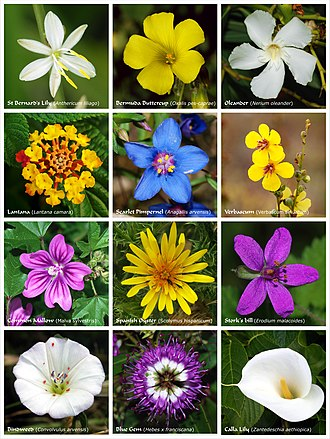 Flower - A poster with flowers or clusters of flowers produced by twelve species of flowering plants from different families.