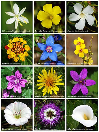 A poster with twelve species of flowers or clusters of flowers of different families