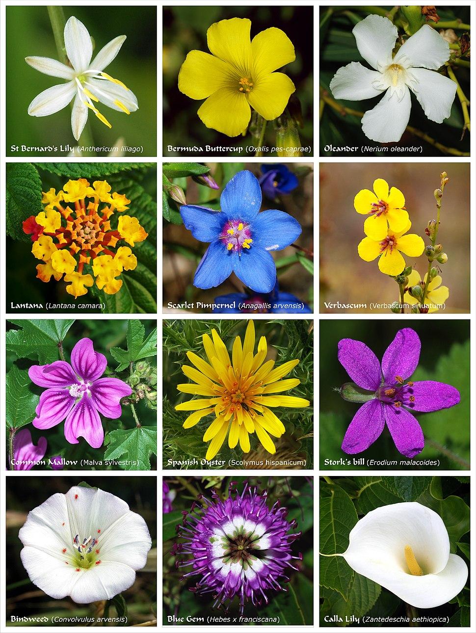 Flower poster 2