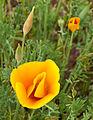 Flowers (4481764753).jpg